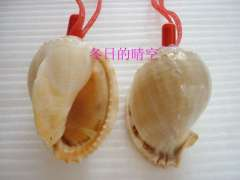 Natural conch shell crafts small accessories small gift whistle watermelon screw decorative pattern