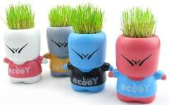DIY naughty Lang grass planting | Blue