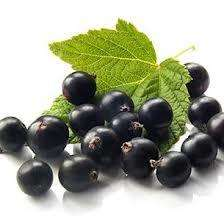 Black Currant Extract- Anthocyanidins